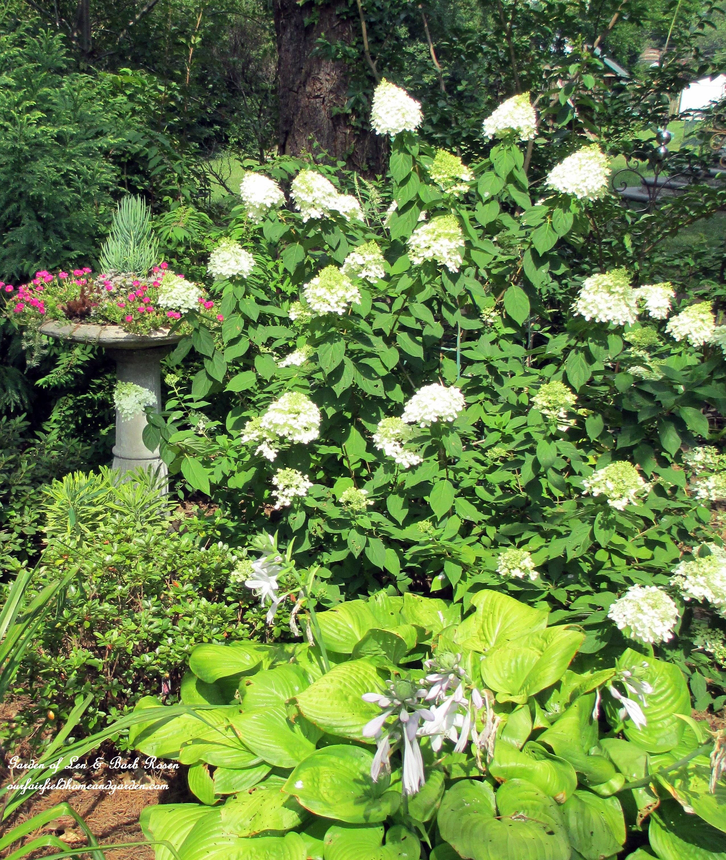 Shade Loving Our Fairfield Home Amp Garden