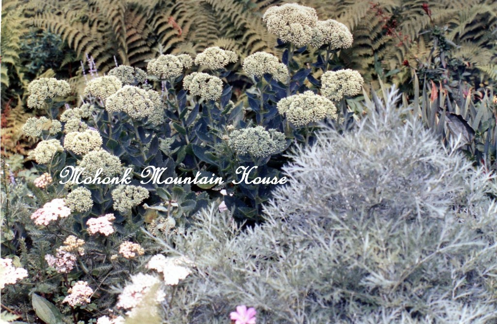 Mohonk http://ourfairfieldhomeandgarden.com/inspiring-gardens/mohonk/