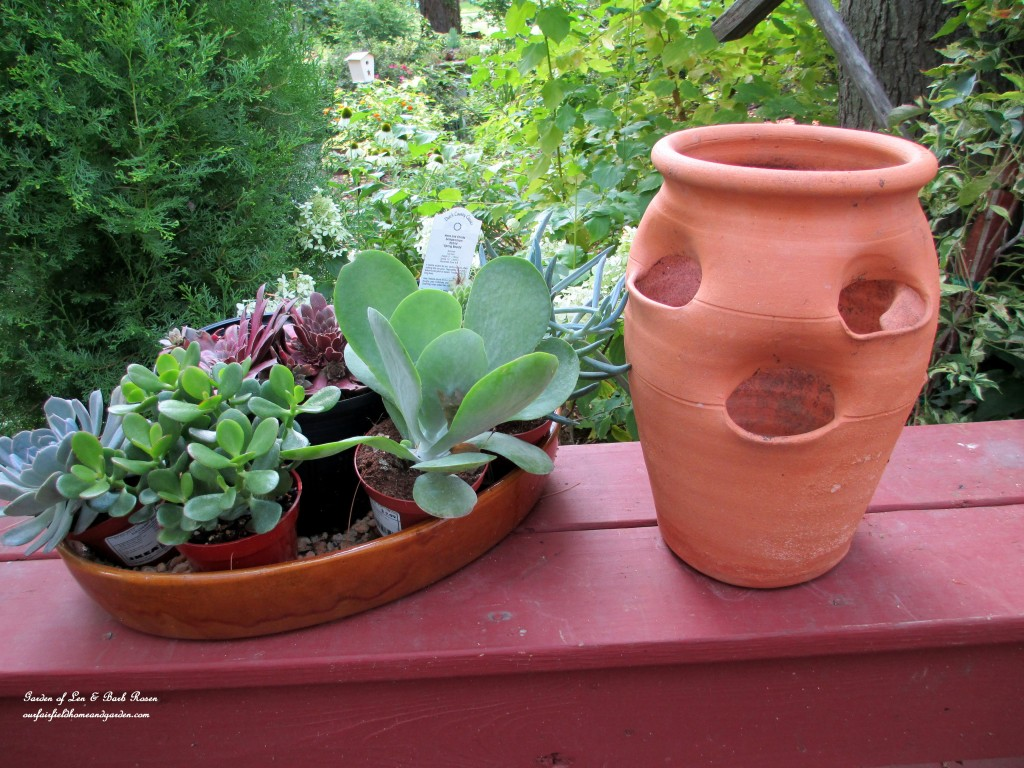 Diy project succulent planter pot our fairfield home Cactus pots for sale