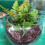 http://ourfairfieldhomeandgarden.com/diy-project-create-your-own-fairy-terrarium/
