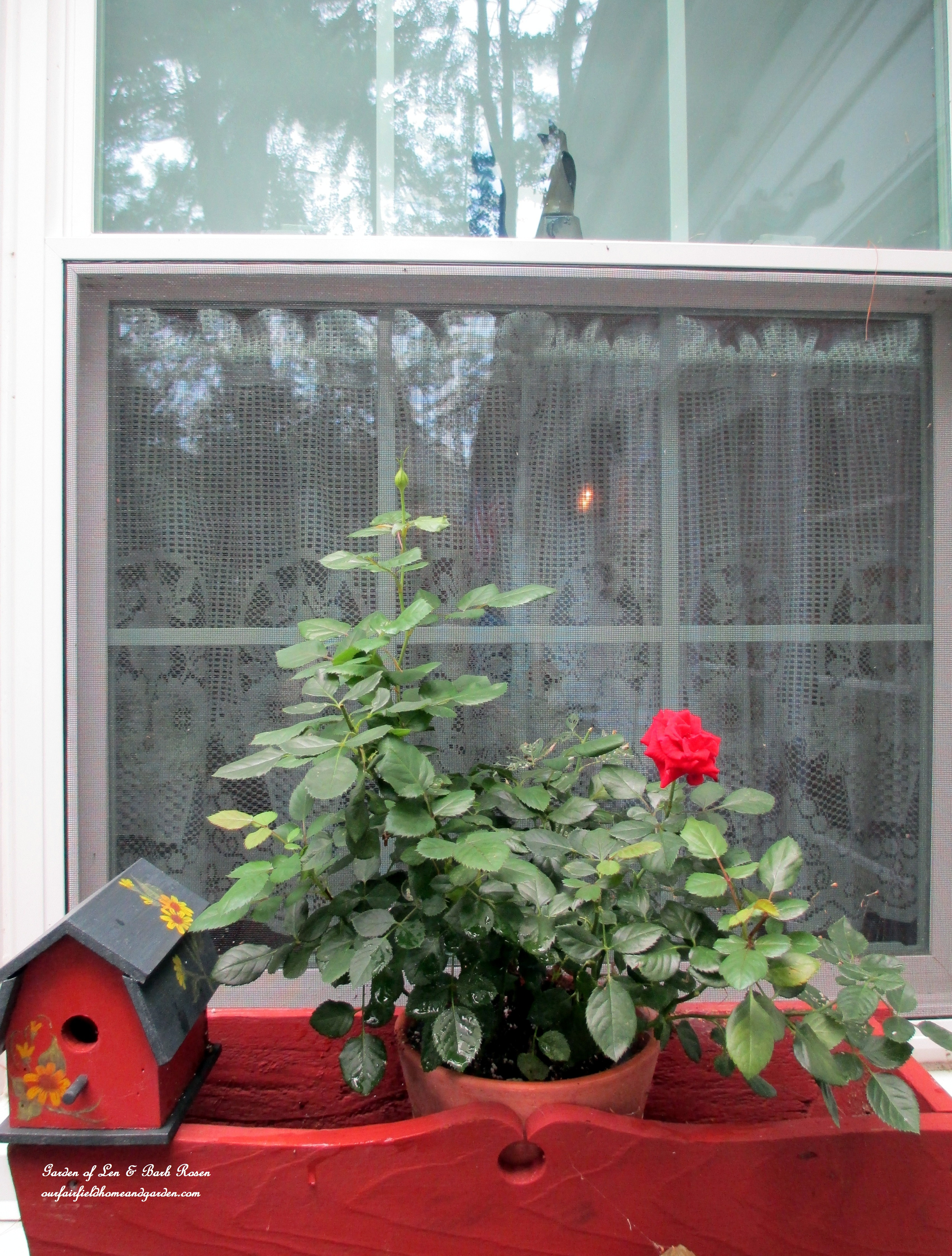 Walk In Garden Box: Flowers Going To Seed And Colors Muting: Early September