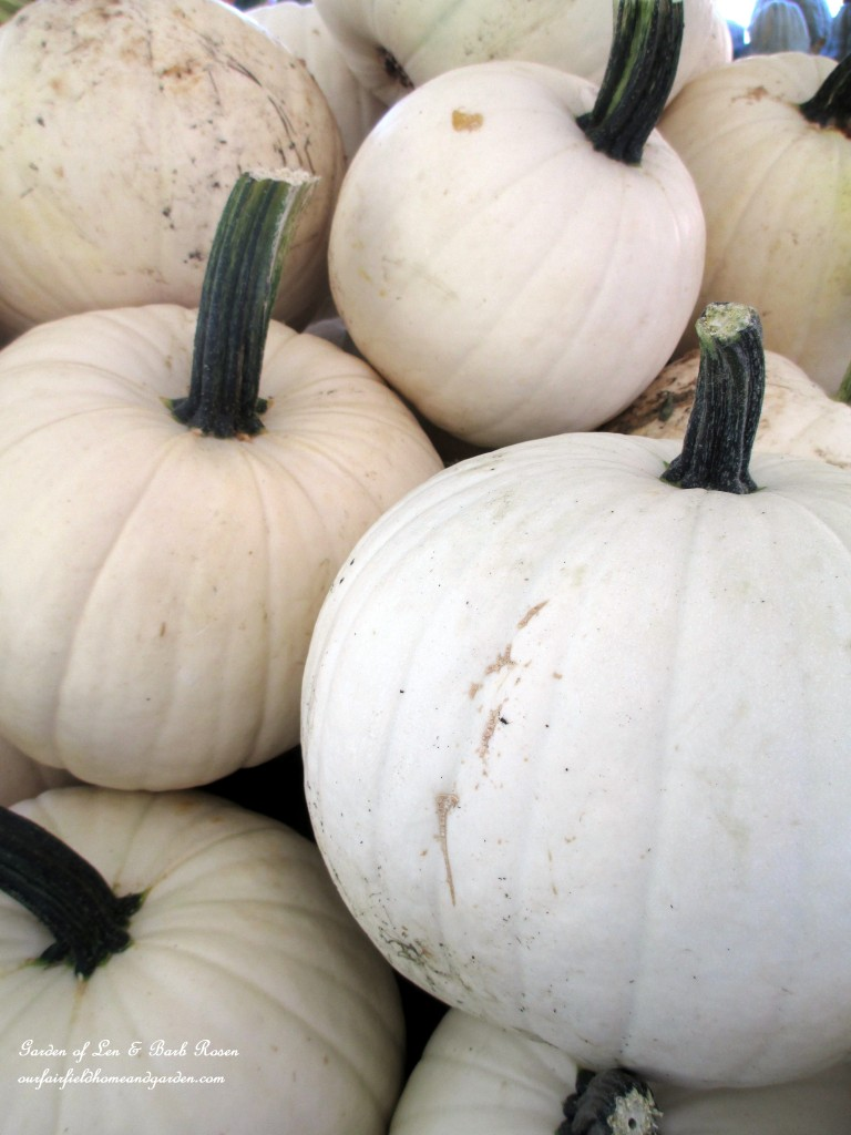 White Pumpkins http://ourfairfieldhomeandgarden.com/field-trip-gourds-galore-and-norman-the-pot-bellied-pig-at-marinis-market/