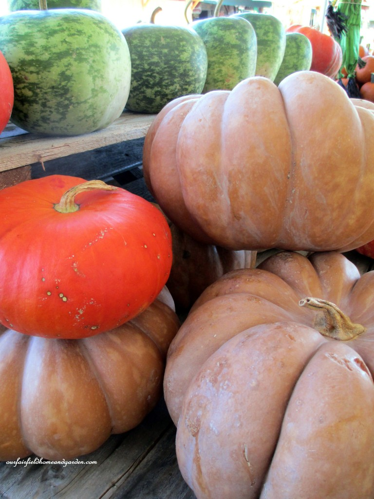 Fall Pumpkins http://ourfairfieldhomeandgarden.com/field-trip-gourds-galore-and-norman-the-pot-bellied-pig-at-marinis-market/