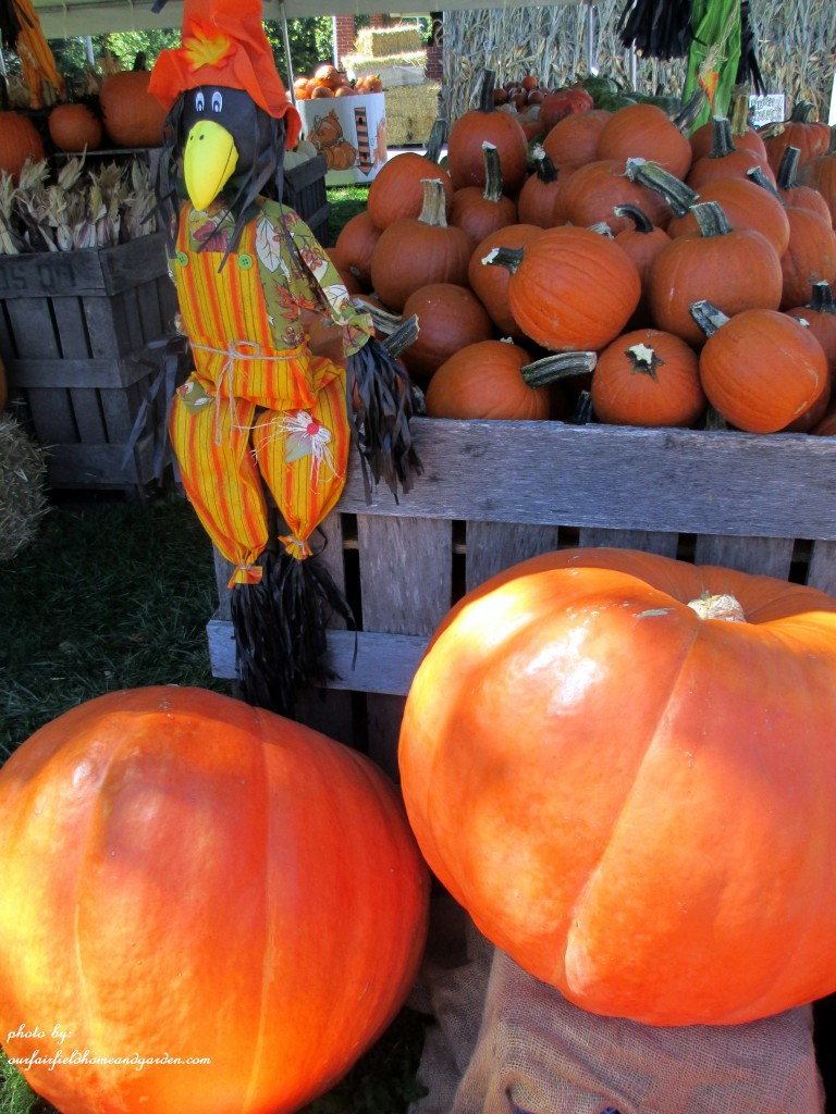 Fall Market https://ourfairfieldhomeandgarden.com/field-trip-gourds-galore-and-norman-the-pot-bellied-pig-at-marinis-market/