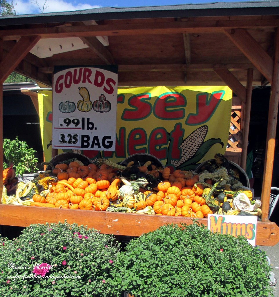 Fall Market http://ourfairfieldhomeandgarden.com/field-trip-gourds-galore-and-norman-the-pot-bellied-pig-at-marinis-market/