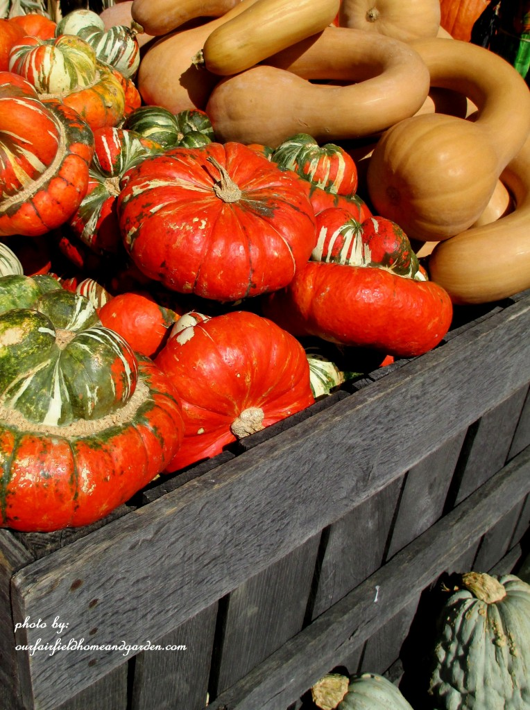 Fall Gourds http://ourfairfieldhomeandgarden.com/field-trip-gourds-galore-and-norman-the-pot-bellied-pig-at-marinis-market/