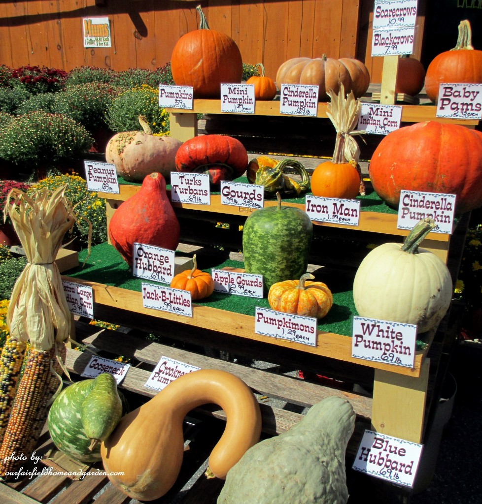 Gourd Identification https://ourfairfieldhomeandgarden.com/field-trip-gourds-galore-and-norman-the-pot-bellied-pig-at-marinis-market/