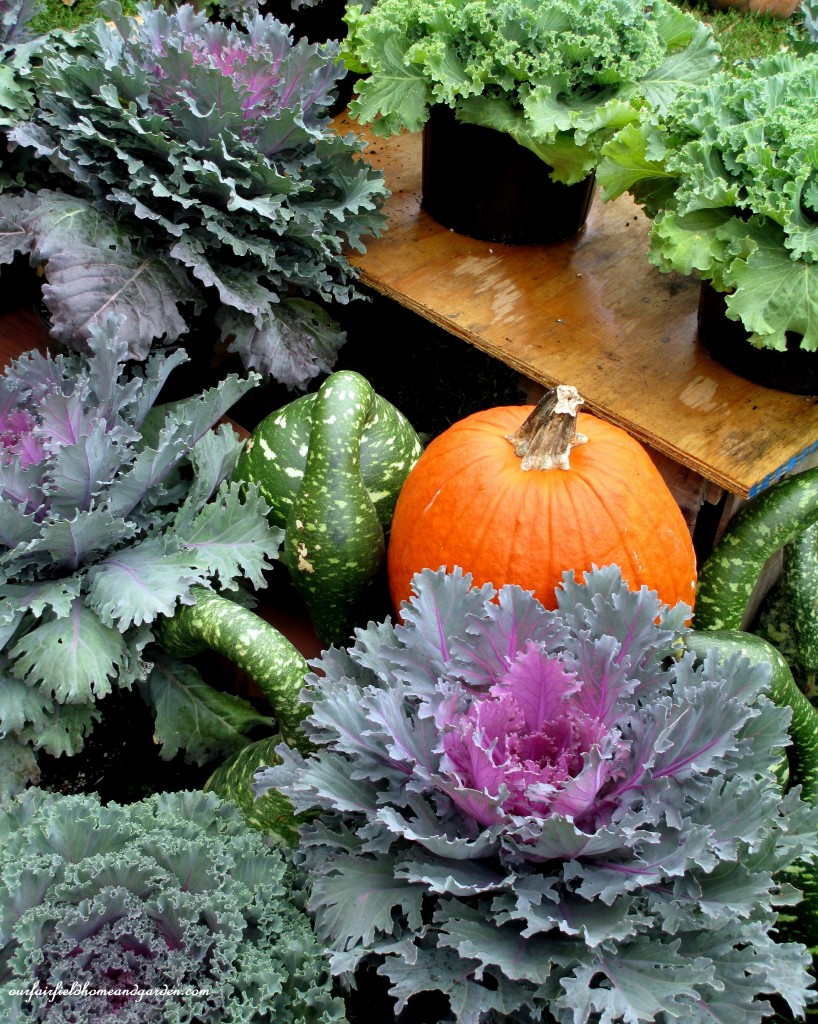 Kale http://ourfairfieldhomeandgarden.com/field-trip-gourds-galore-and-norman-the-pot-bellied-pig-at-marinis-market/