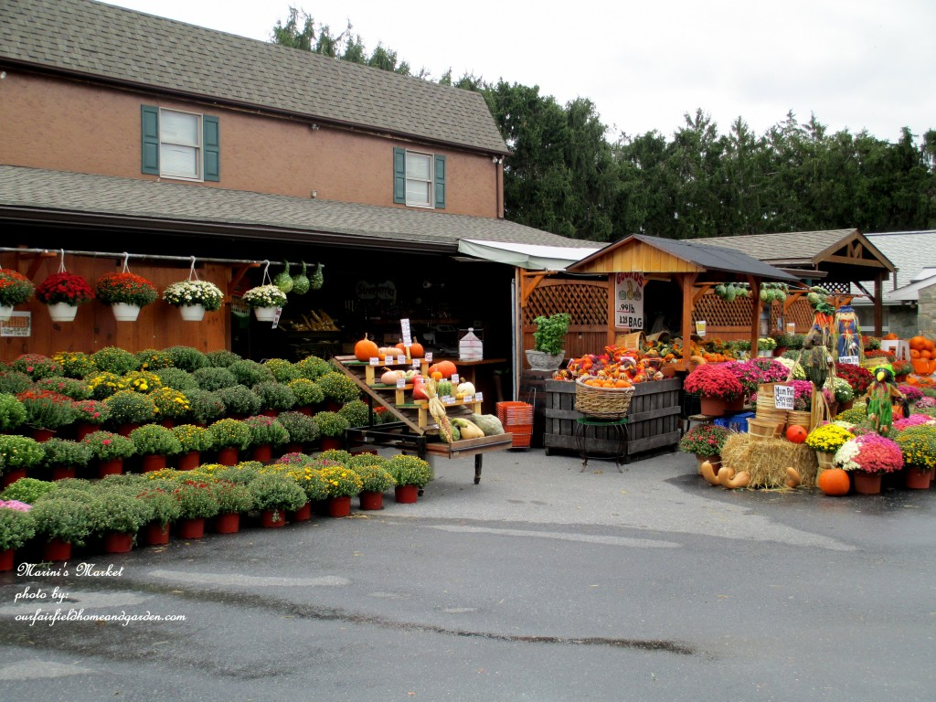 Marini's Market In Fall http://ourfairfieldhomeandgarden.com/field-trip-gourds-galore-and-norman-the-pot-bellied-pig-at-marinis-market/