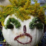 Sally Solidago Punkin' Head https://ourfairfieldhomeandgarden.com/getting-into-the-spirit-of-halloween-insert-spooky-music-here/