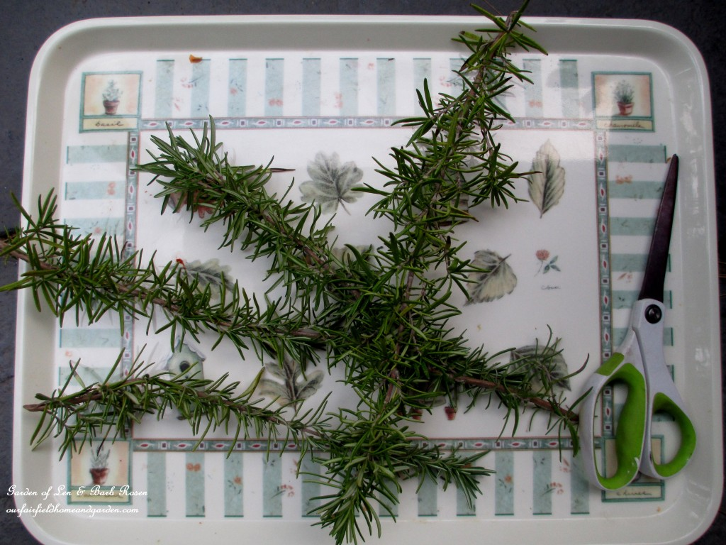 Make a Rosemary Wreath http://ourfairfieldhomeandgarden.com/diy-project-make-a-fresh-rosemary-wreath/