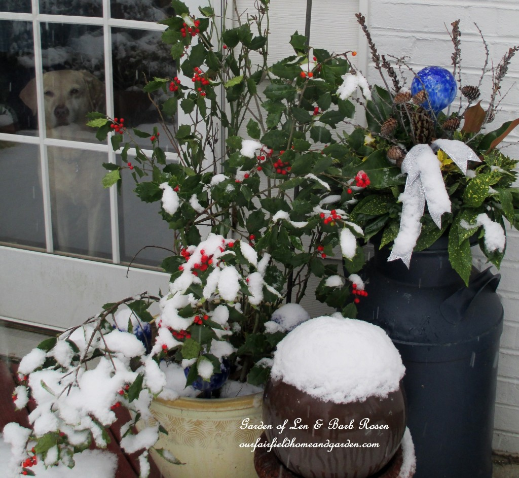 Chelsea Sue watching the snow fall https://ourfairfieldhomeandgarden.com/winter-wonderland-it-finally-snowed/