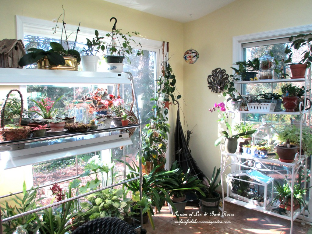 sunny Garden Room on a January morning http://ourfairfieldhomeandgarden.com/my-winter-sanctuary-scenes-from-a-garden-room/