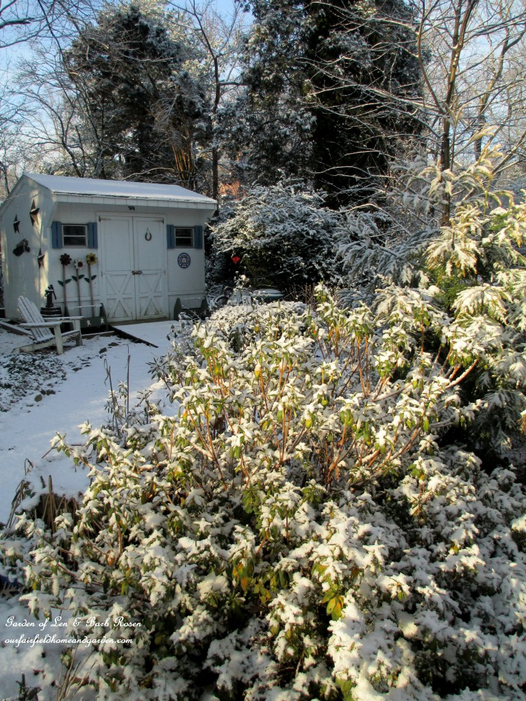 back to the garden shed http://ourfairfieldhomeandgarden.com/january-winter-garden/