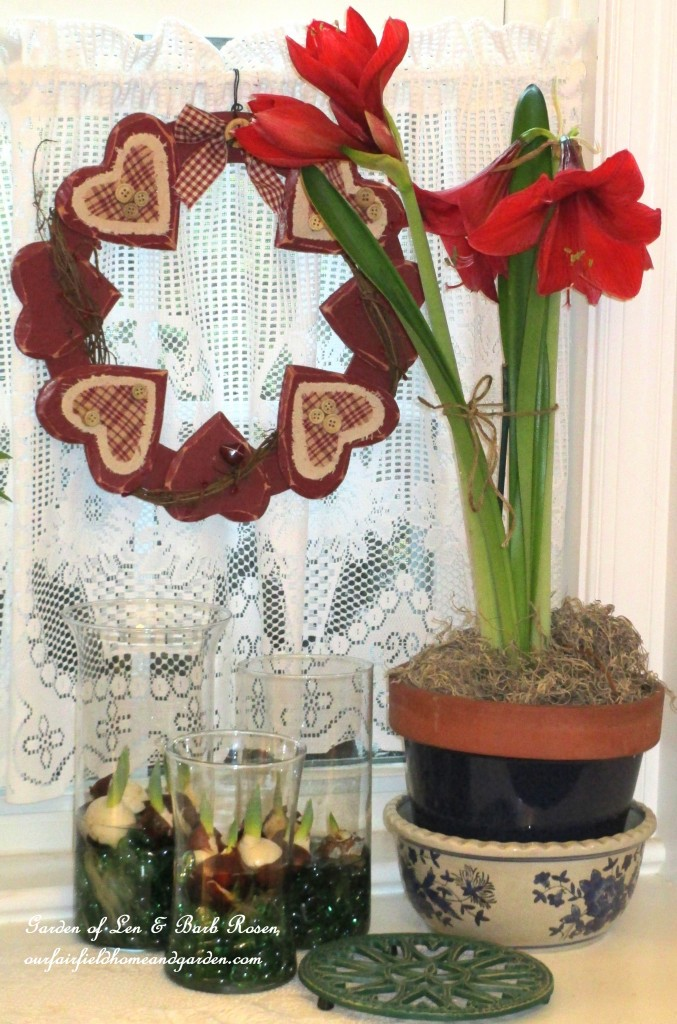 Amaryllis & tulips starting to sprout in vases https://ourfairfieldhomeandgarden.com/be-my-valentine-valentine-decor/