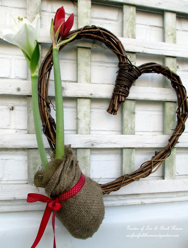 Amaryllis Heart https://ourfairfieldhomeandgarden.com/be-my-valentine-valentine-decor/