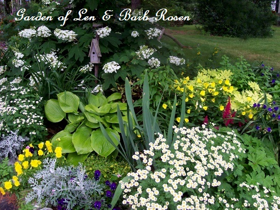 Oakleaf hydrangea, hosta, artemesia, feverfew, sundrops, pansies, astilbe, iris and spiderwort