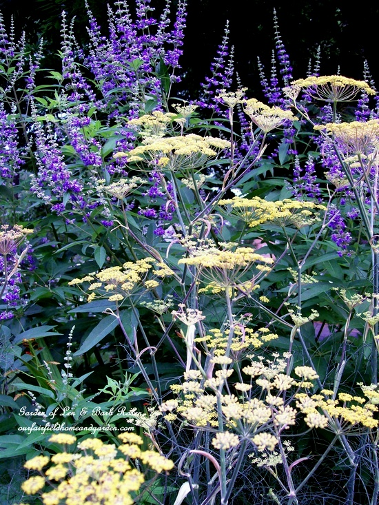 Vitex & Bronze Fennel
