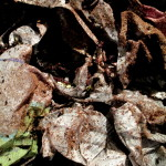 mix a few handfuls of peat moss with the wet newspaper and toss lightly