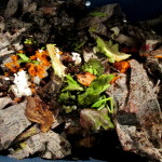Vericompost Bin https://ourfairfieldhomeandgarden.com/diy-project-vermicomposting-in-a-tub-in-a-few-easy-steps/
