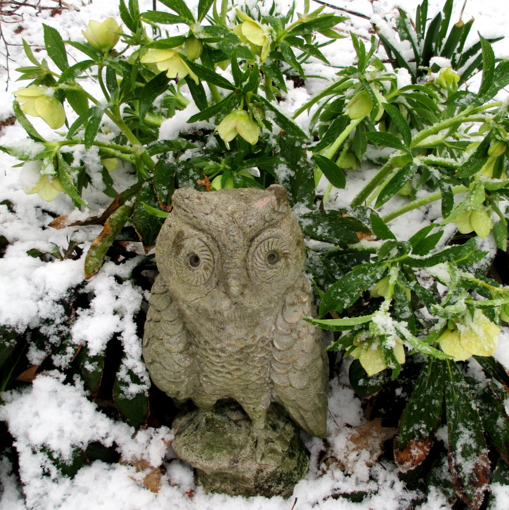 Owl in the White Hellebores http://ourfairfieldhomeandgarden.com/spring-snow-march-25th-the-groundhog-lied/