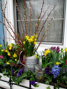 Welcome spring with a windowbox full of spring blooms! https://ourfairfieldhomeandgarden.com/diy-project-welcome-spring-time-to-change-the-window-boxes/