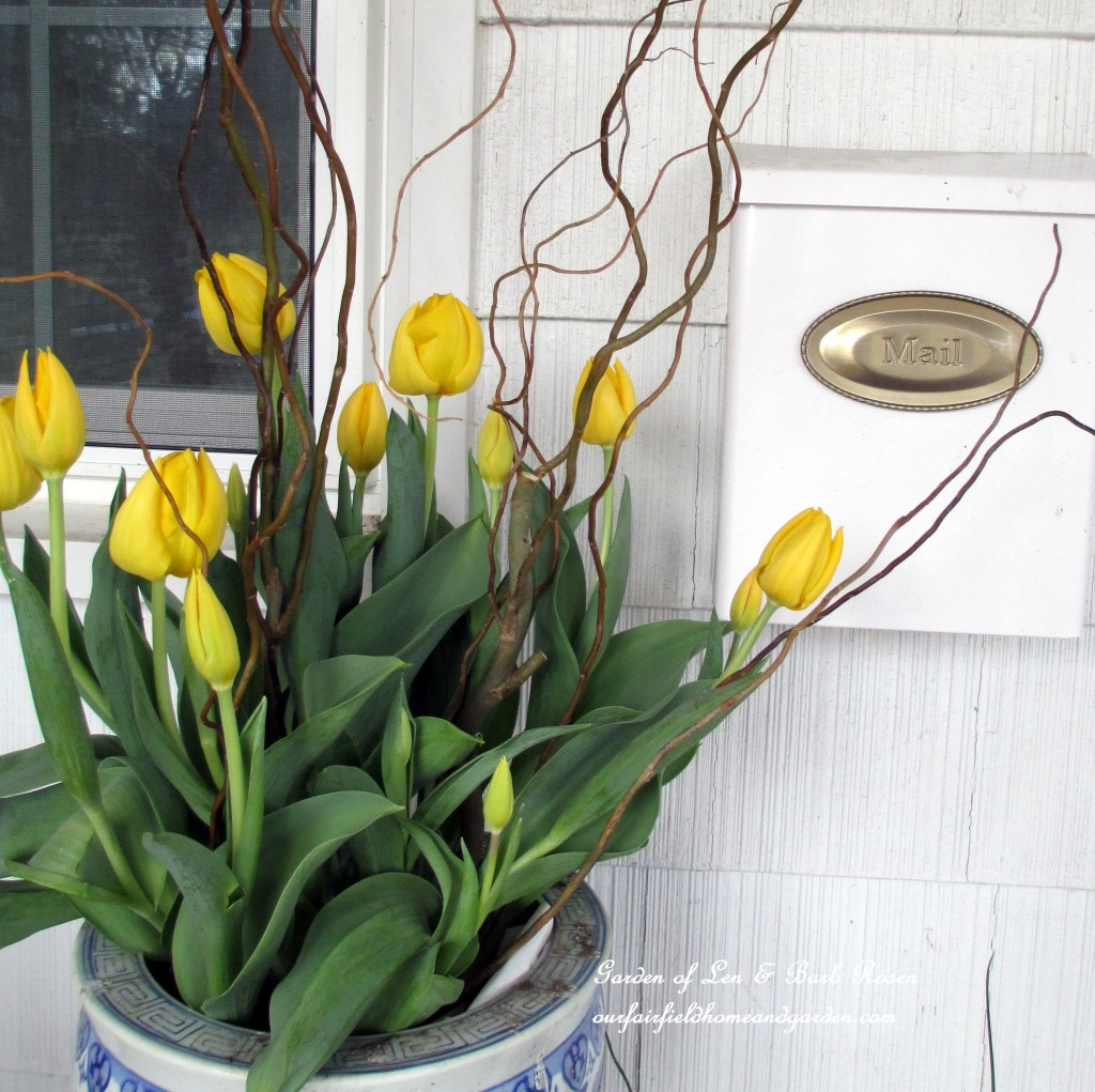 spring tulips http://ourfairfieldhomeandgarden.com/spring-is-busting-out-all-over/