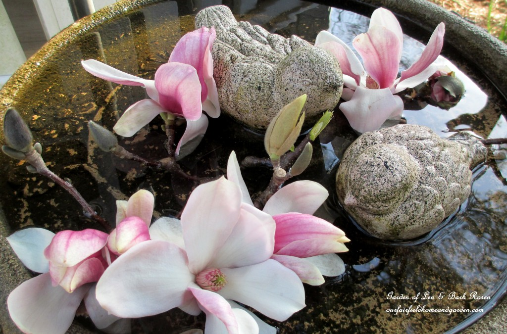 magnolia blooms in the bird bath https://ourfairfieldhomeandgarden.com/spring-is-here-early-spring-blossoms/
