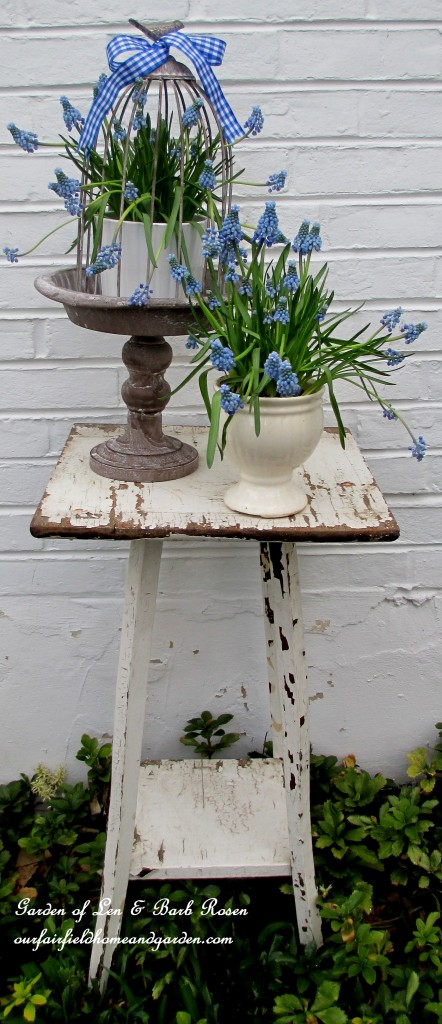 Spring vignette ~ Muscari https://ourfairfieldhomeandgarden.com/mid-april-spring-blooms-in-the-garden/