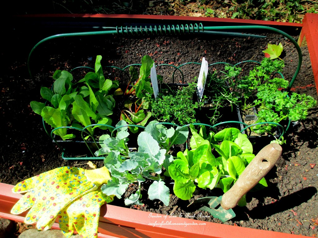 early season seedlings ready to plant http://ourfairfieldhomeandgarden.com/diy-project-raised-beds-for-free/