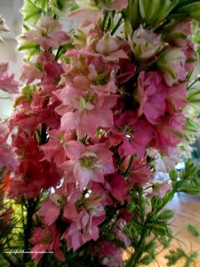 3 stems ~ larkspur