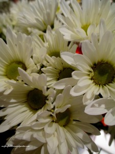 2 stems ~ white daisy mums