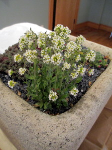 smooth, artisan-made hypertufa garden example