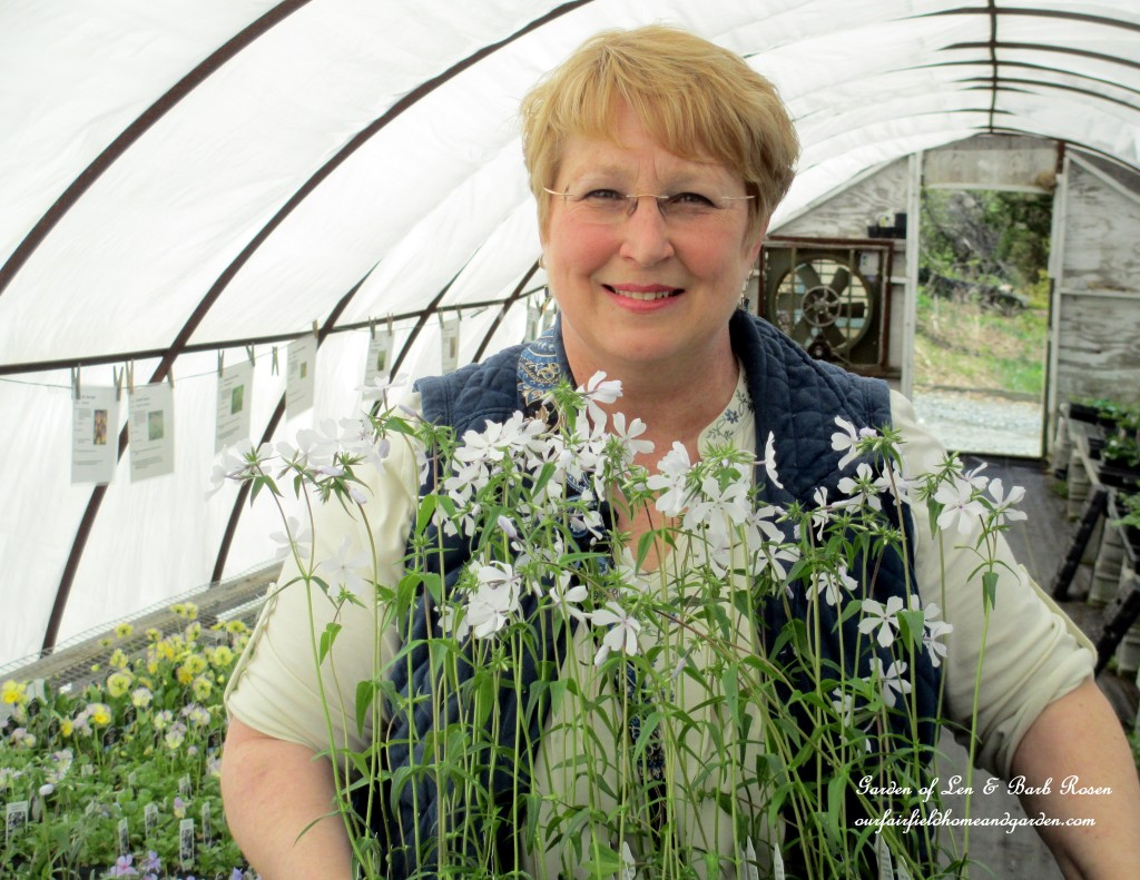 Me at Groff's Plant Farm with a new acquisition ~ Wild Sweet William https://ourfairfieldhomeandgarden.com/the-merry-merry-month-of-may/