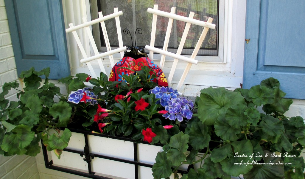 window box with geraniums, hydrangea and mandevilla https://ourfairfieldhomeandgarden.com/the-merry-merry-month-of-may/