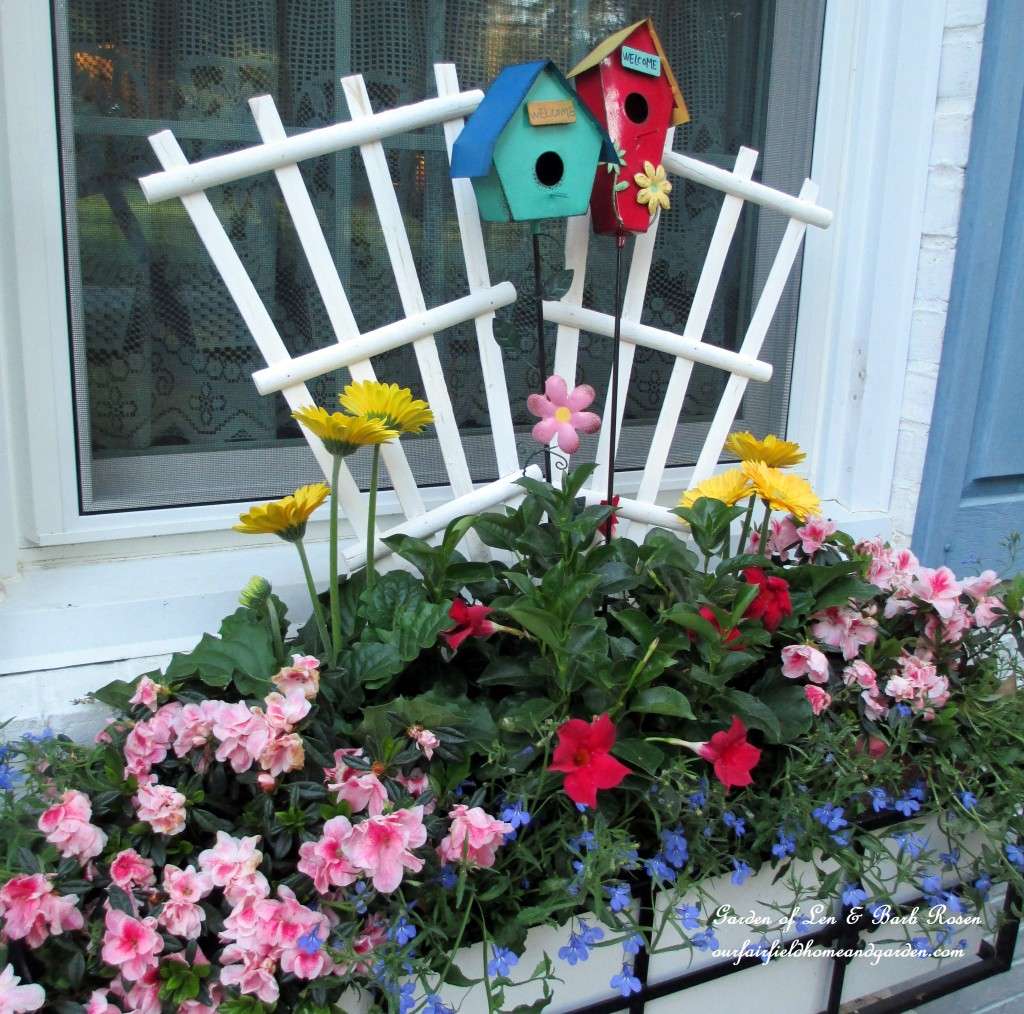 window box with lobelia, gerber daisies, mandevilla and azaleas http://ourfairfieldhomeandgarden.com/the-merry-merry-month-of-may/