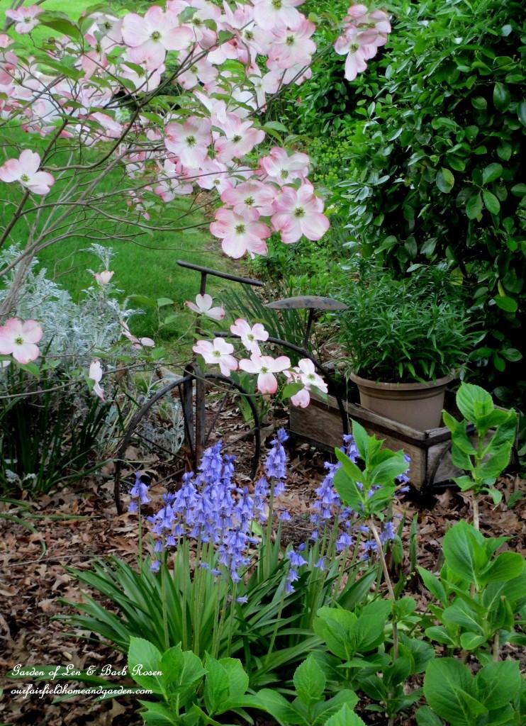 Dogwood, bluebells and columbine