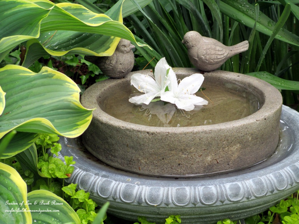 Birdbath nestled in the hostas