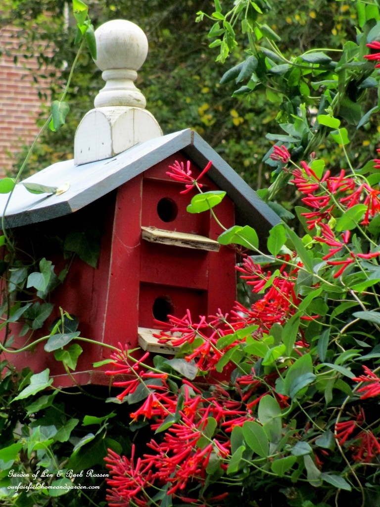 Birdhouse & Lonicera https://ourfairfieldhomeandgarden.com/may-garden-birdhouses-flowers/
