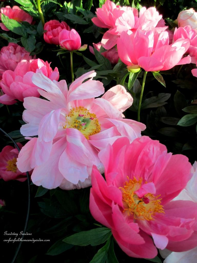 https://ourfairfieldhomeandgarden.com/springtime-in-goodstay-gardens/