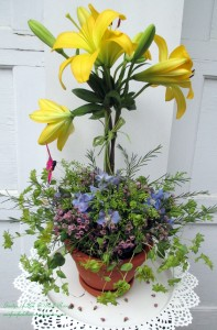 Blooming Topiary http://ourfairfieldhomeandgarden.com/diy-project-blooming-topiary/