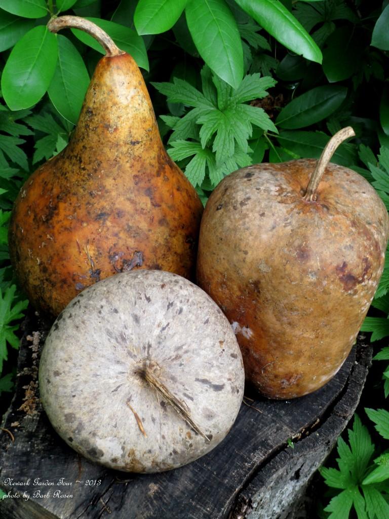 Dried Gourd Accents http://ourfairfieldhomeandgarden.com/newark-garden-tour-2013/
