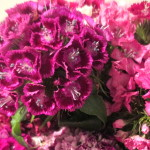 Sweet William http://ourfairfieldhomeandgarden.com/diy-project-country-flower-basket/