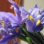 Iris http://ourfairfieldhomeandgarden.com/diy-project-country-flower-basket/
