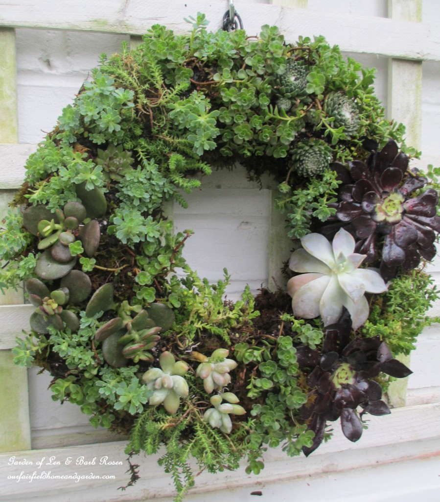 ~ finished succulent wreath ~ http://ourfairfieldhomeandgarden.com/diy-project-make-a-succulent-wreath/