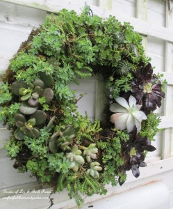 ~ Succulent Wreath ~ https://ourfairfieldhomeandgarden.com/diy-project-make-a-succulent-wreath/