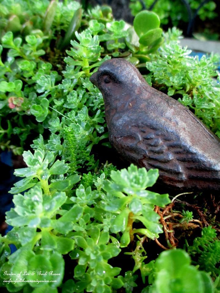 cast iron bird in succulents