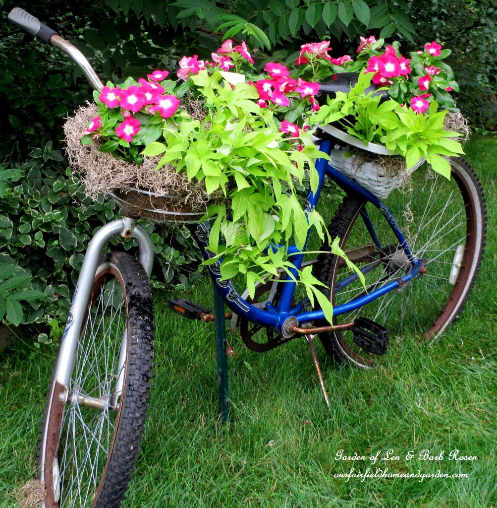 Planting is complete, now we need some streamers! http://ourfairfieldhomeandgarden.com/diy-project-my-bicycle-planter/