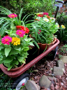zinnias in the nursery wagon