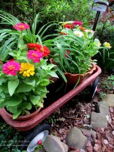 zinnias in the nursery wagon